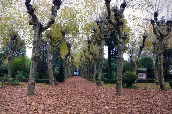 Outono cultural