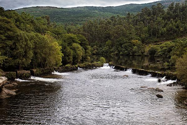Pesquerías de lamprea en el río Ulla